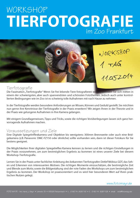 Workshop Tierfotografie im ZOO Ffm